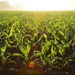 Farm Insurance in MN